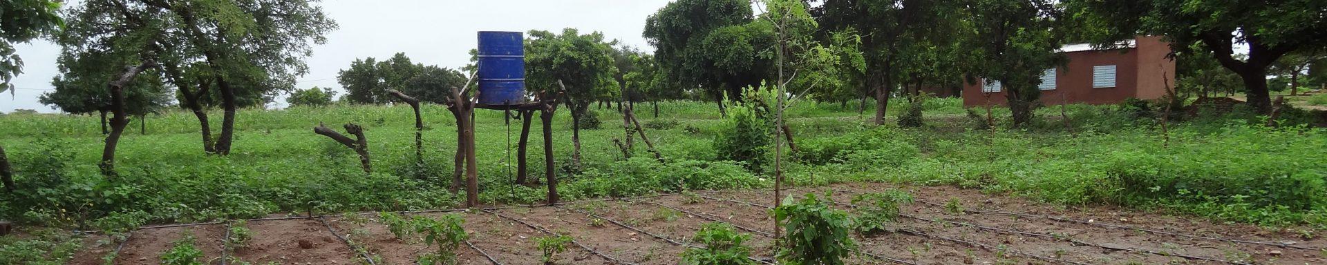 Een verlaten moestuin in Burkina Faso.