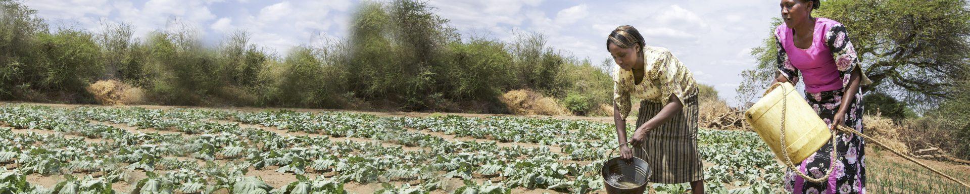 Vrouwen geven gewassen water in Kenia