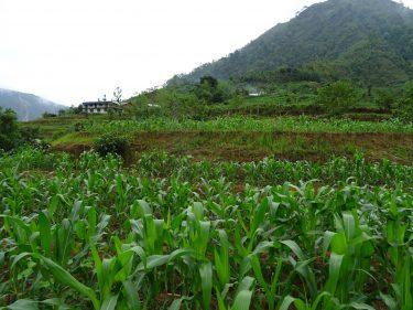 Landbouw in Nepal
