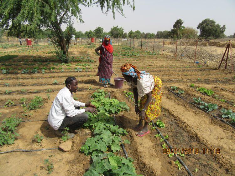 Tuinbouwproject Burkina Faso