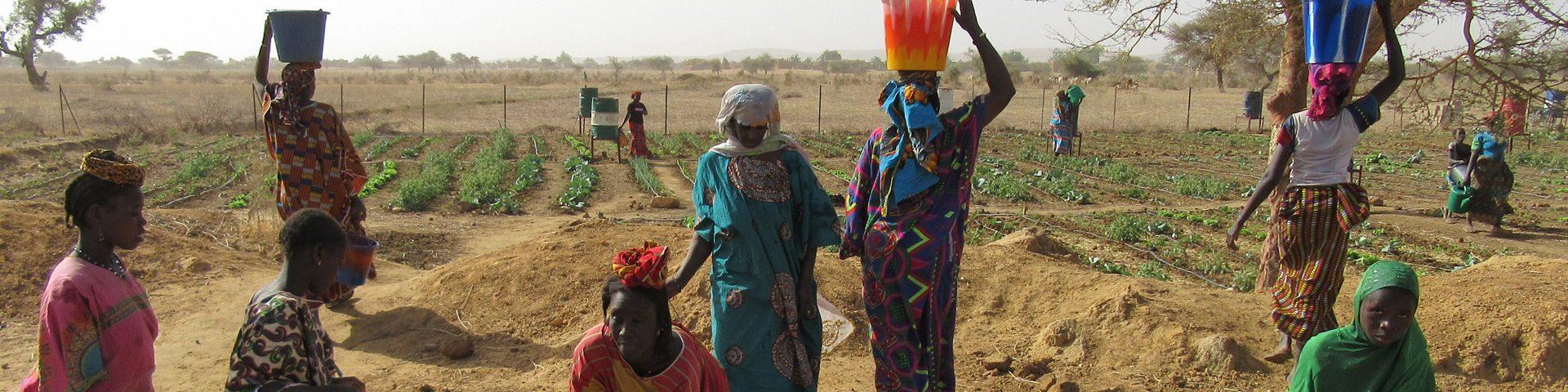 Vrouwen uit Burkina Faso aan het werk in de groentetuin.