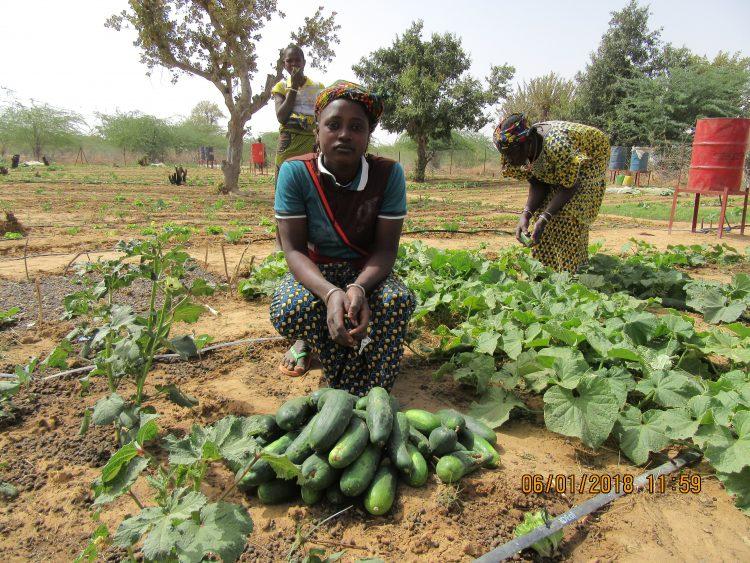 Groentetuin vrouwen Burkina Faso