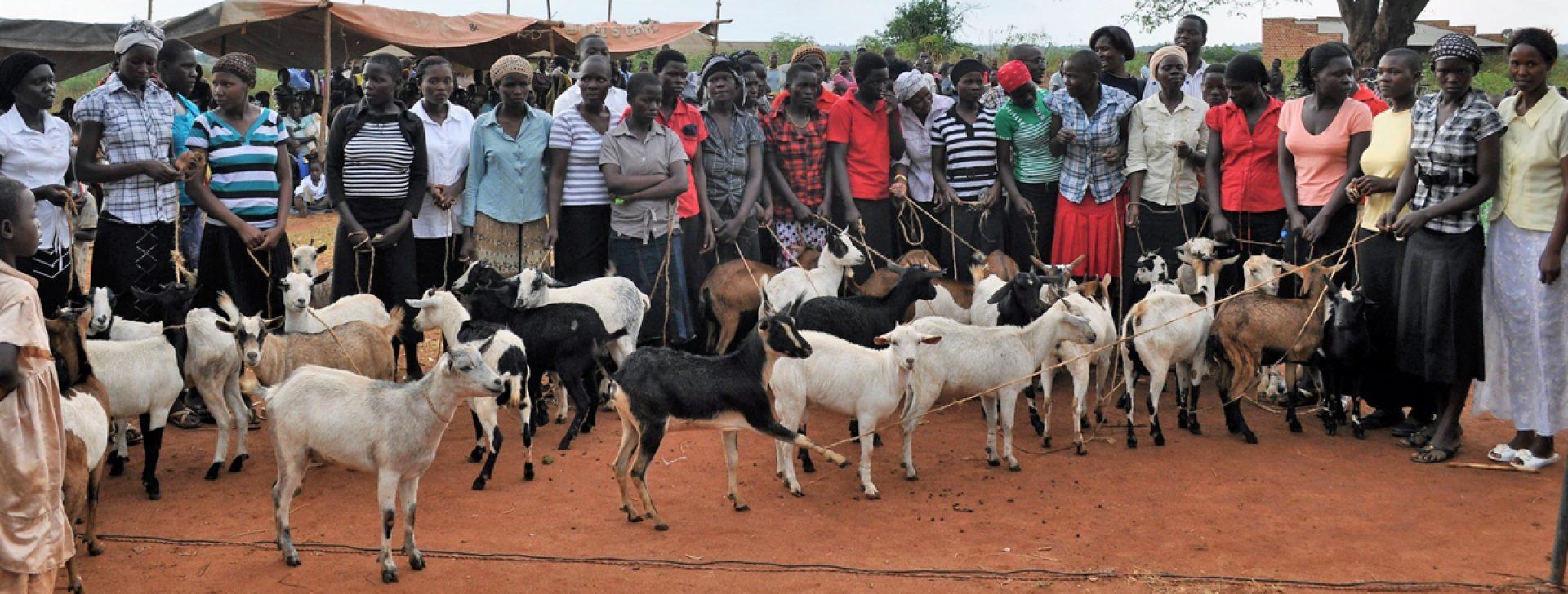Tienermoeders in Oeganda krijgen een geit.