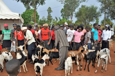 De geiten worden overhandigd aan meisjes in Oeganda.