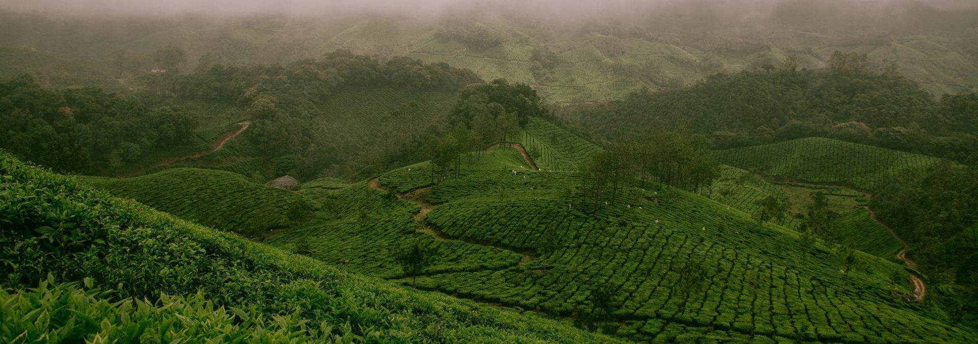 Een groen heuvellandschap in India.