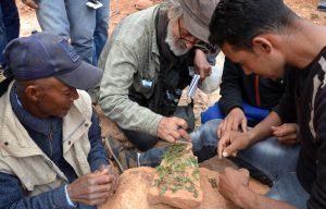 Een man en jongen bekijken groene plantjes in het Atlas gebergte in Marokko.