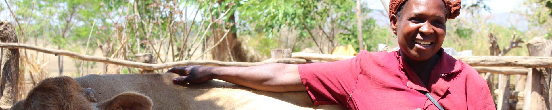 Een vrouw in Malawi poseert lachend met een koe.